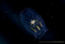 浮遊系生物